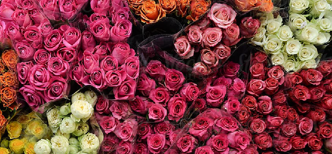 12 Rose Colors with Meaning and Importance To Assist You in Choosing the Best Bouquet